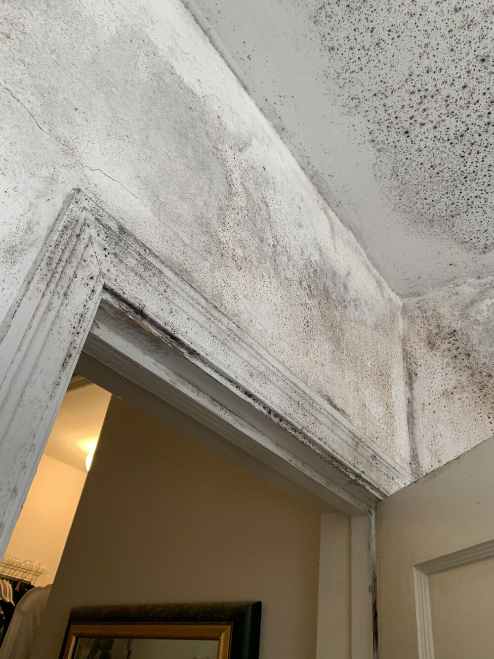 Mold on Walls and How to Remove It